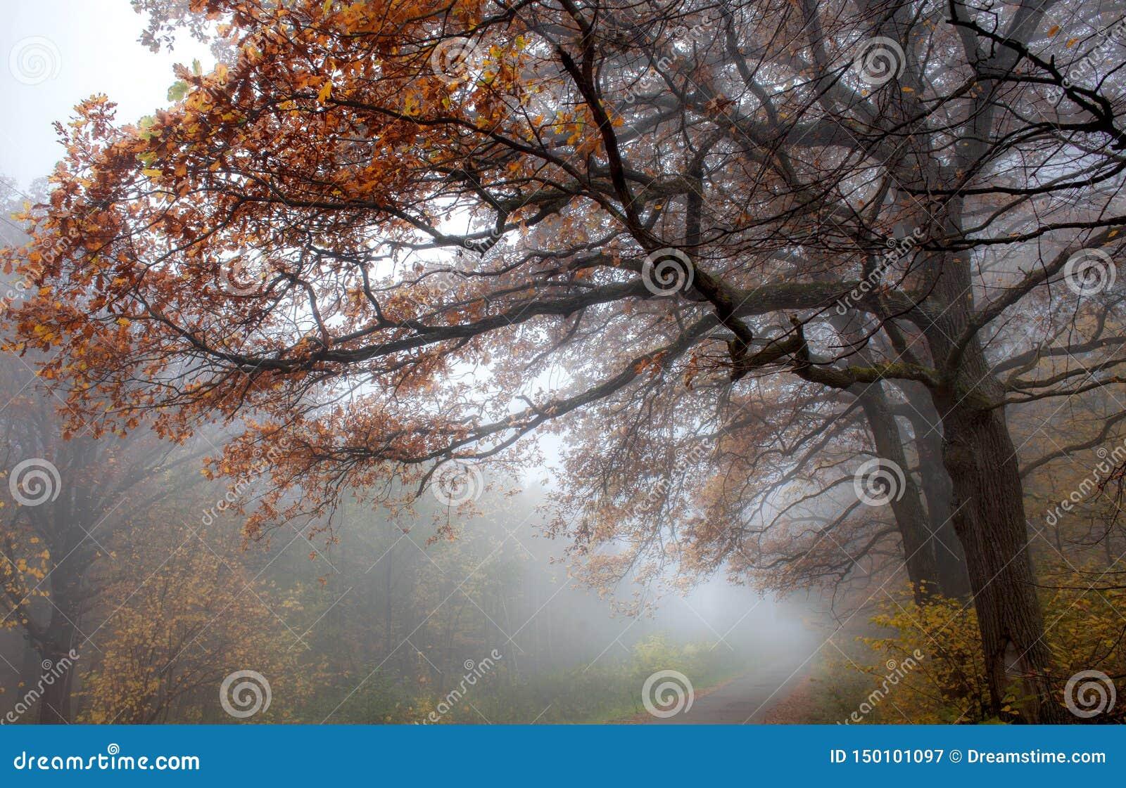 在rainfairy森林雾自然树以后的春黄菊花