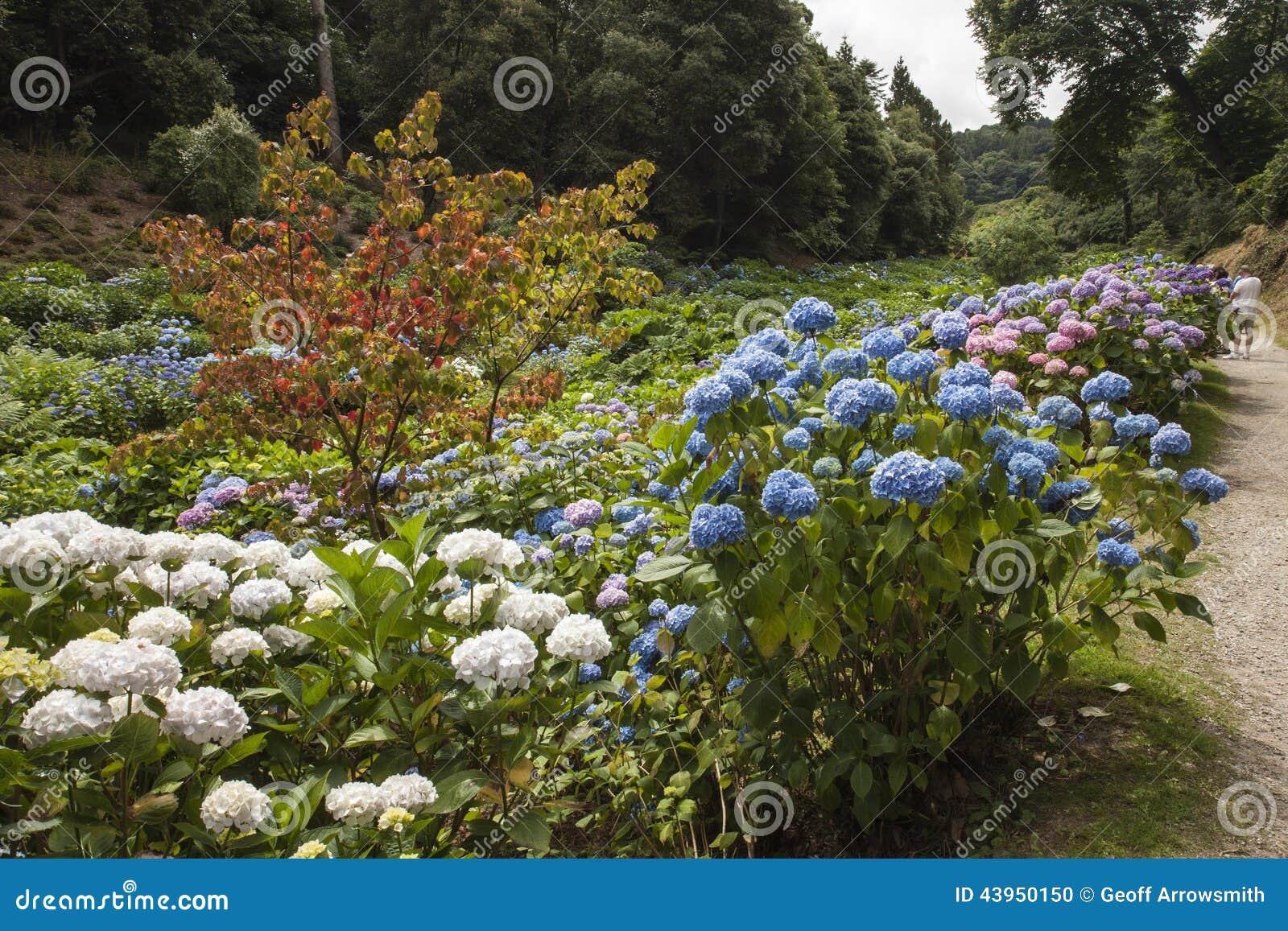 在Trebah庭院,康沃尔郡的花