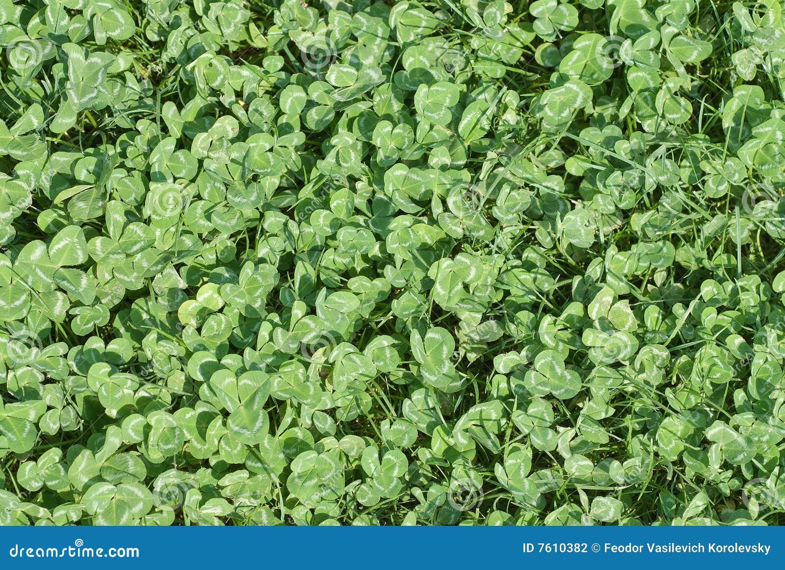地毯绿色叶子