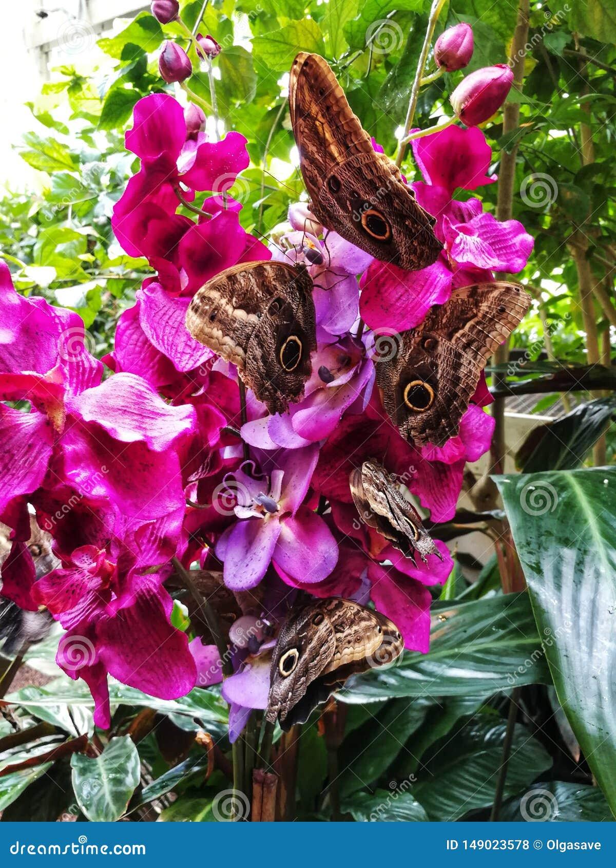 坐兰花分支的蝴蝶