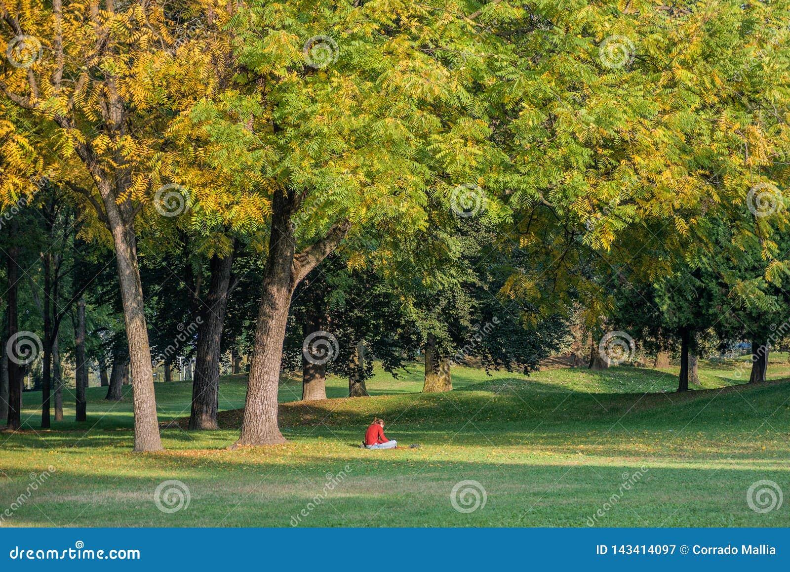 坐在树和阅读书下的十几岁的女孩