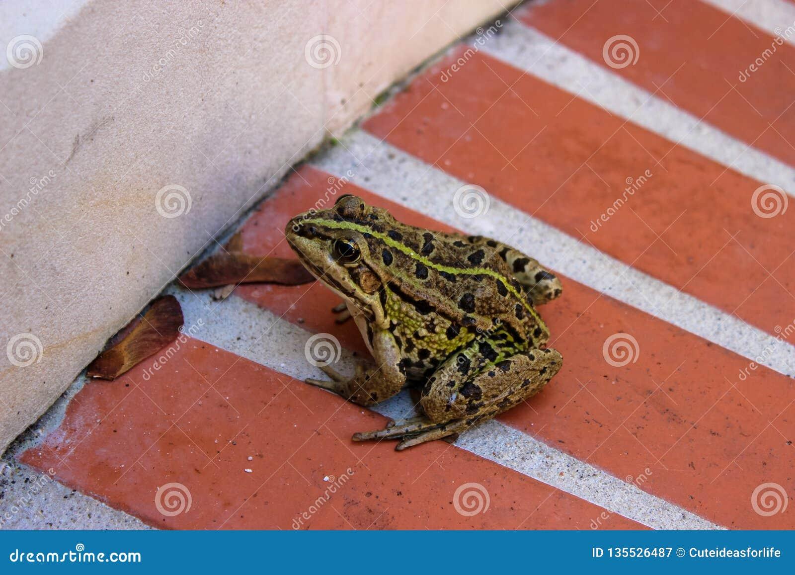 坐在白色墙壁附近的青蛙
