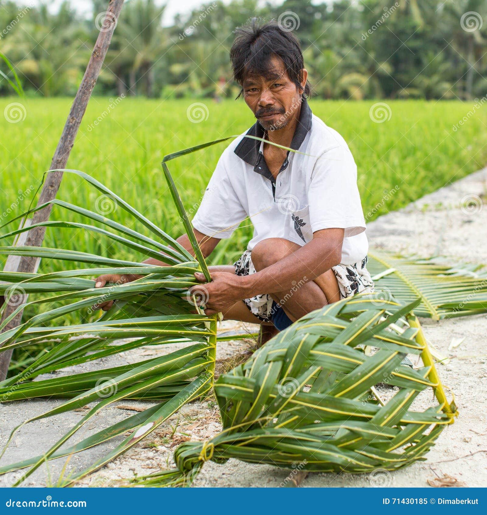坐在米领域附近和编织篮子的村民在棕榈叶外面图片