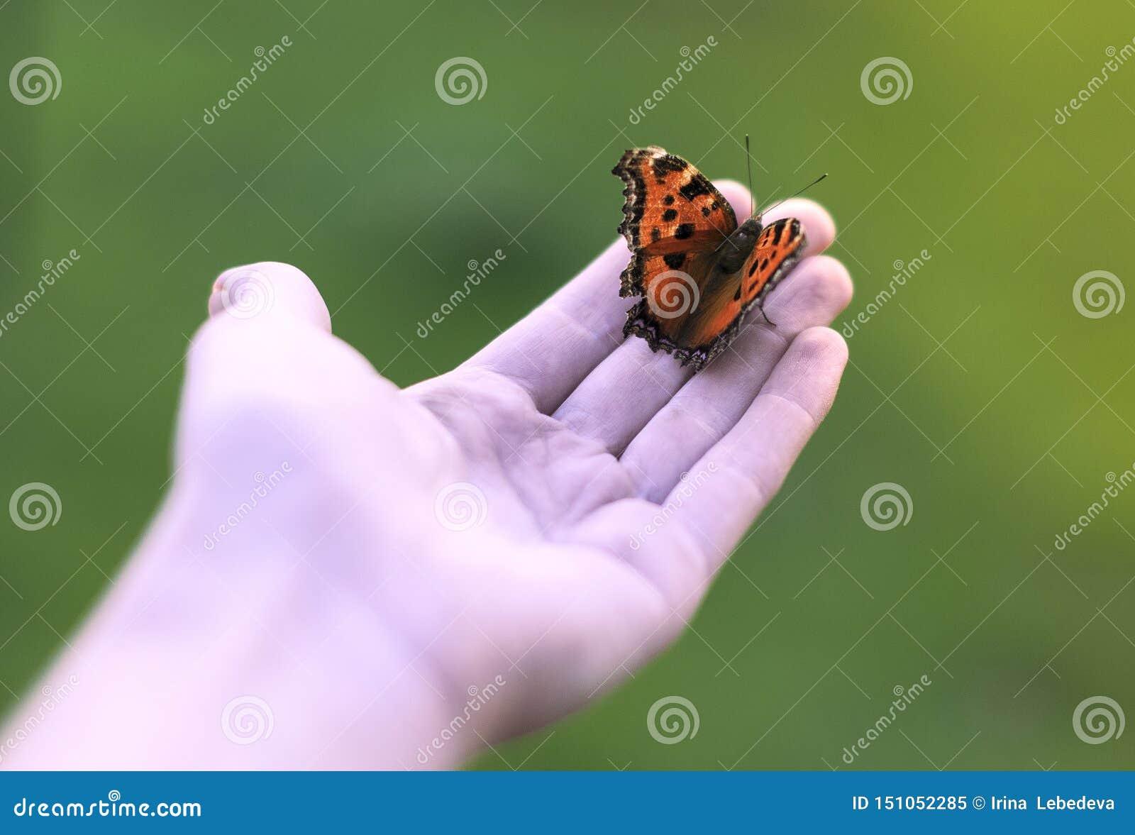 坐您的在绿色背景的手棕榈的橙色蝴蝶