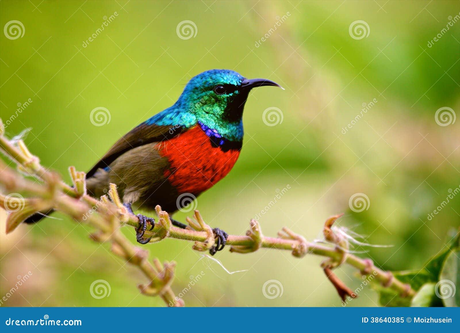 坦桑尼亚的鸟