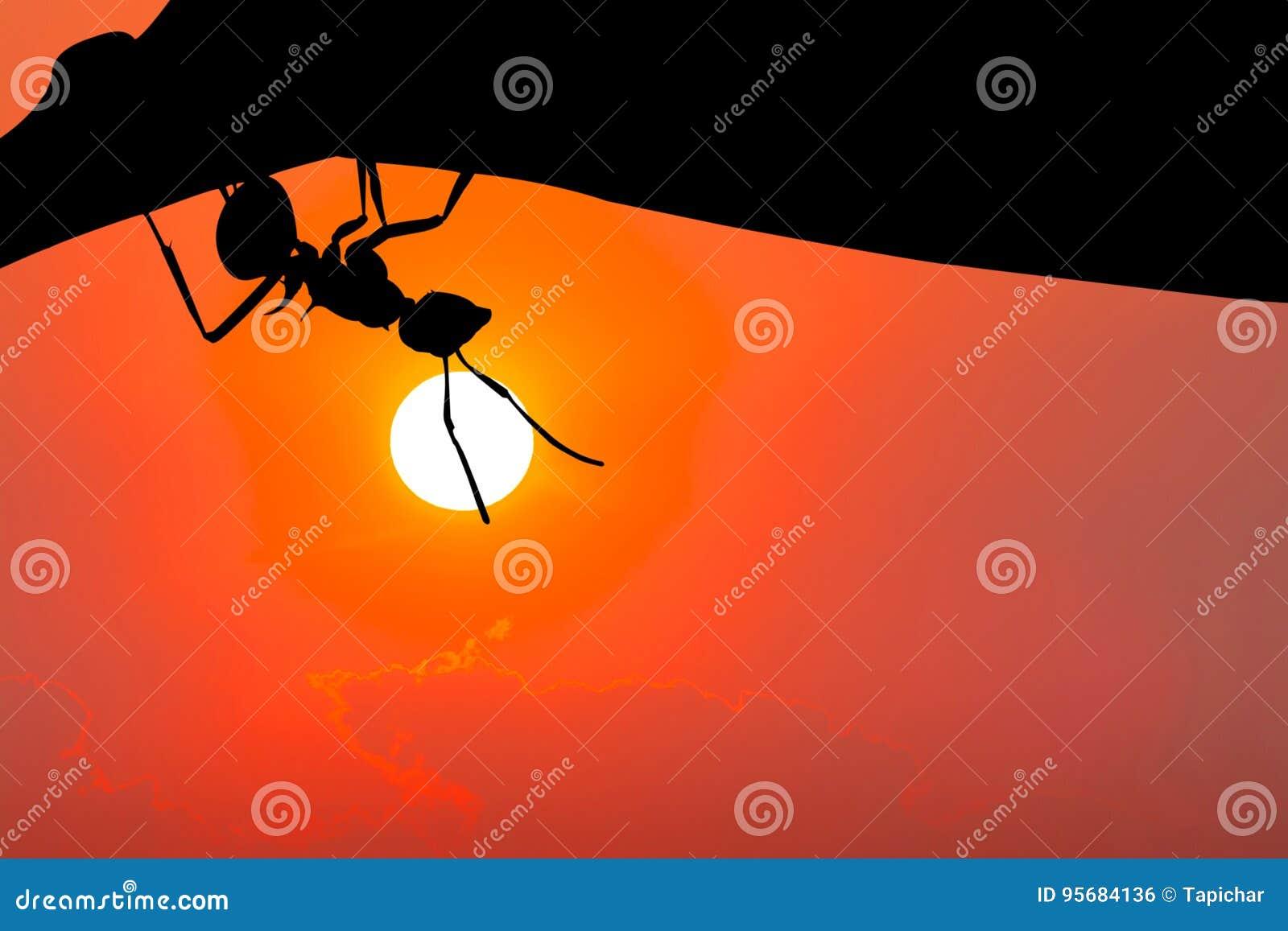 垂悬在叶子的蚂蚁剪影 这有裁减路线