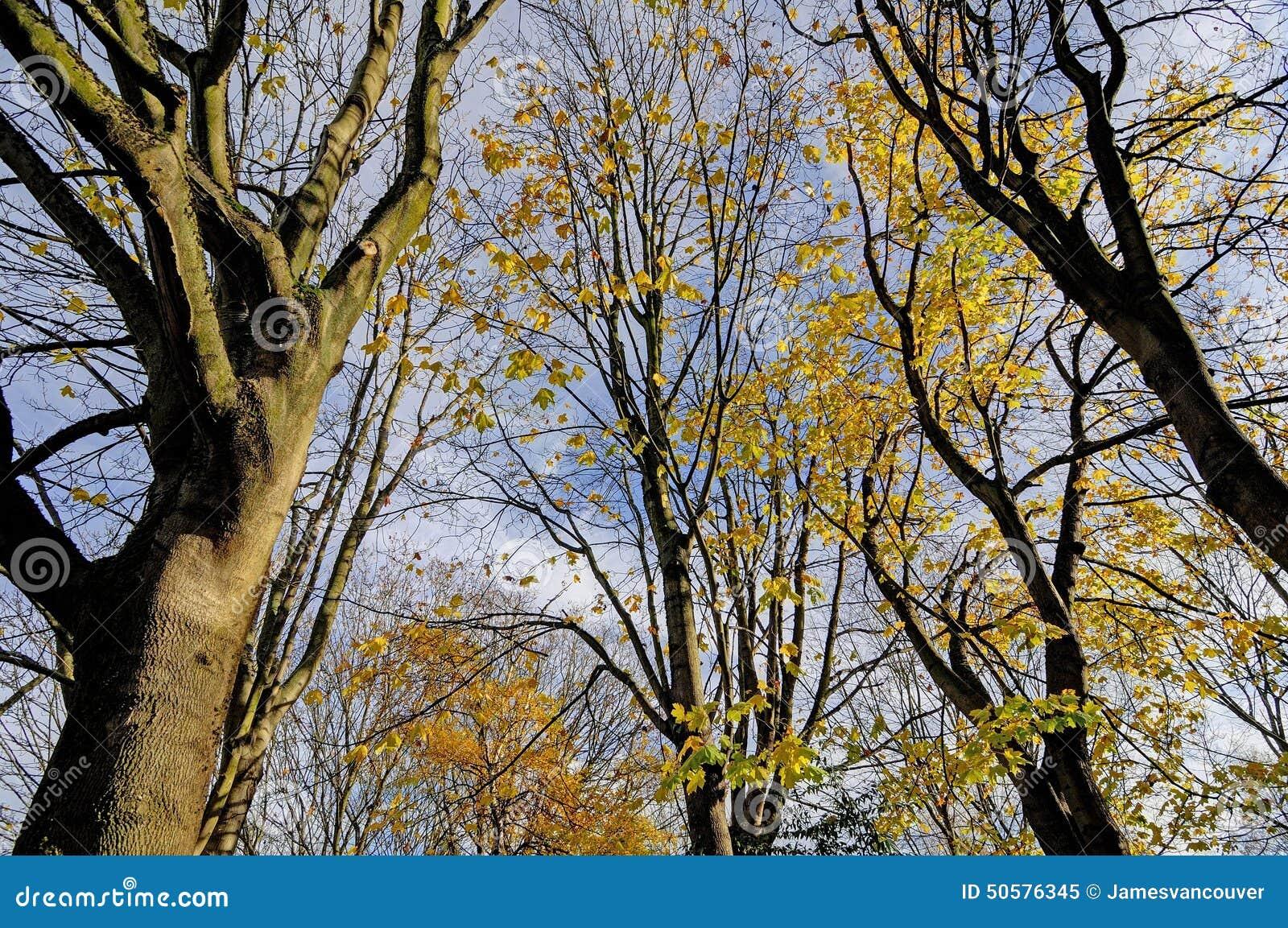 垂悬在树枝在早期的冬天,温哥华,不列颠哥伦比亚省,加拿大的一些片图片