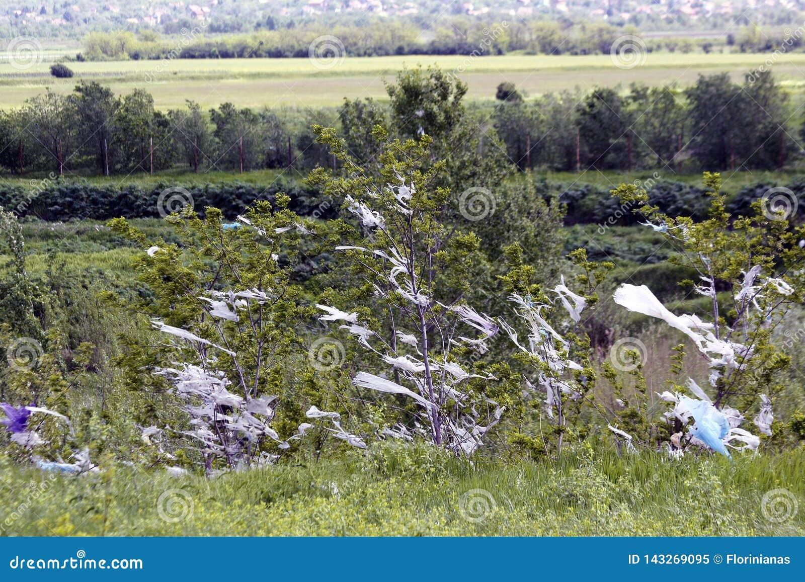垂悬在树的塑料袋片断吹由风 生态学的灾害