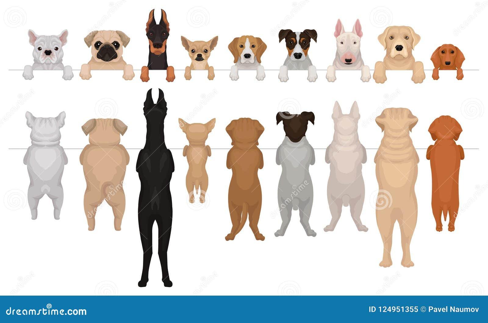 垂悬在边界的不同的品种狗  枪口画象有爪子和充分的身体的 前面和后面看法 平面