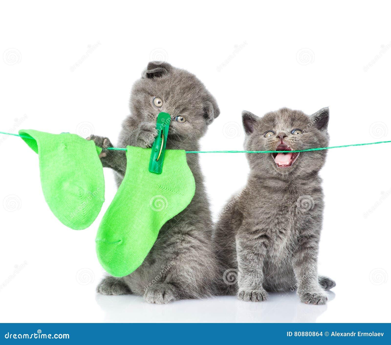 垂悬在绳索的两只小猫袜子烘干的 查出在白色