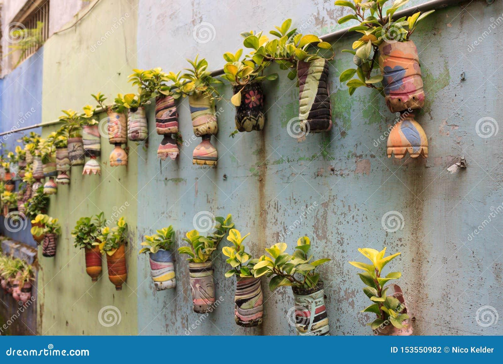垂悬,盆的植物行,在玛琅,印度尼西亚