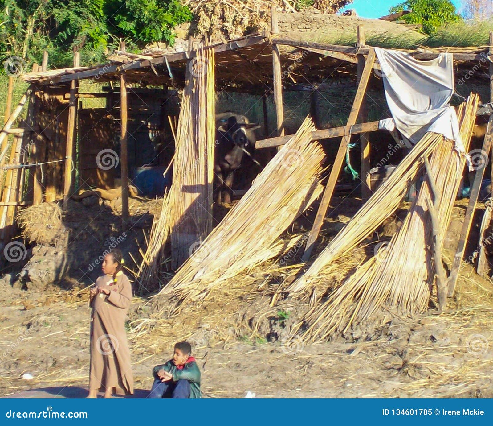埃及,尼罗,埃及当地COS埃及人的槽枥,有家畜的两儿童纸莎草仓促,孩子