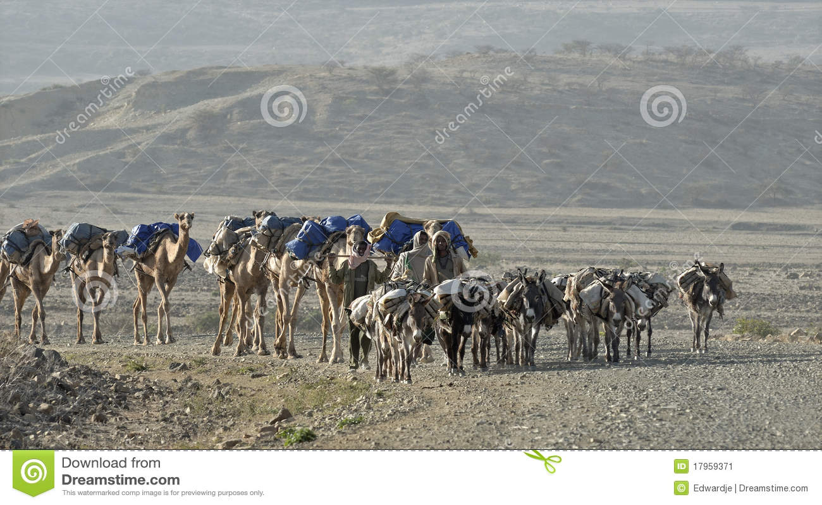 埃赛俄比亚骆驼的有蓬卡车