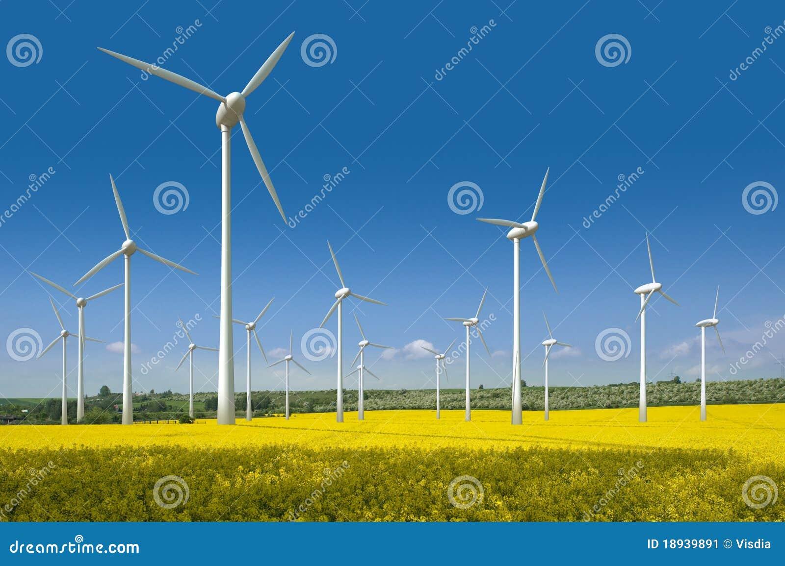 域油菜籽涡轮风