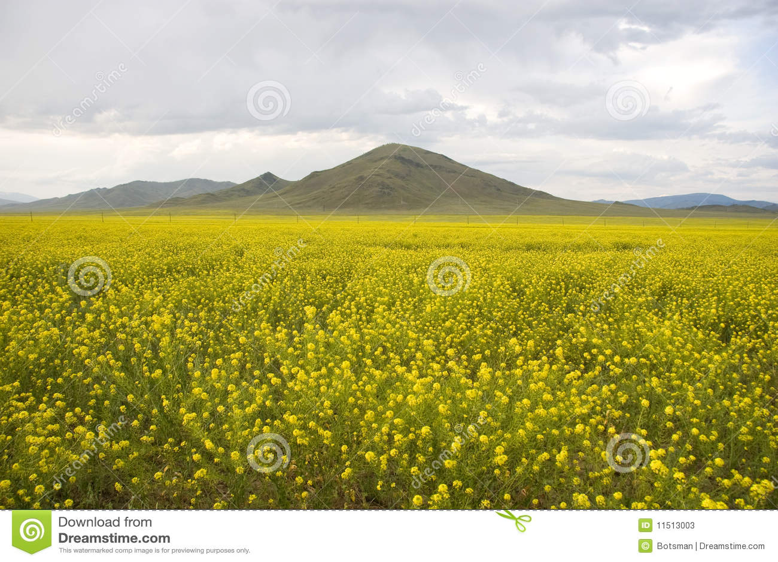 草比黄色图片网站_域草黄色