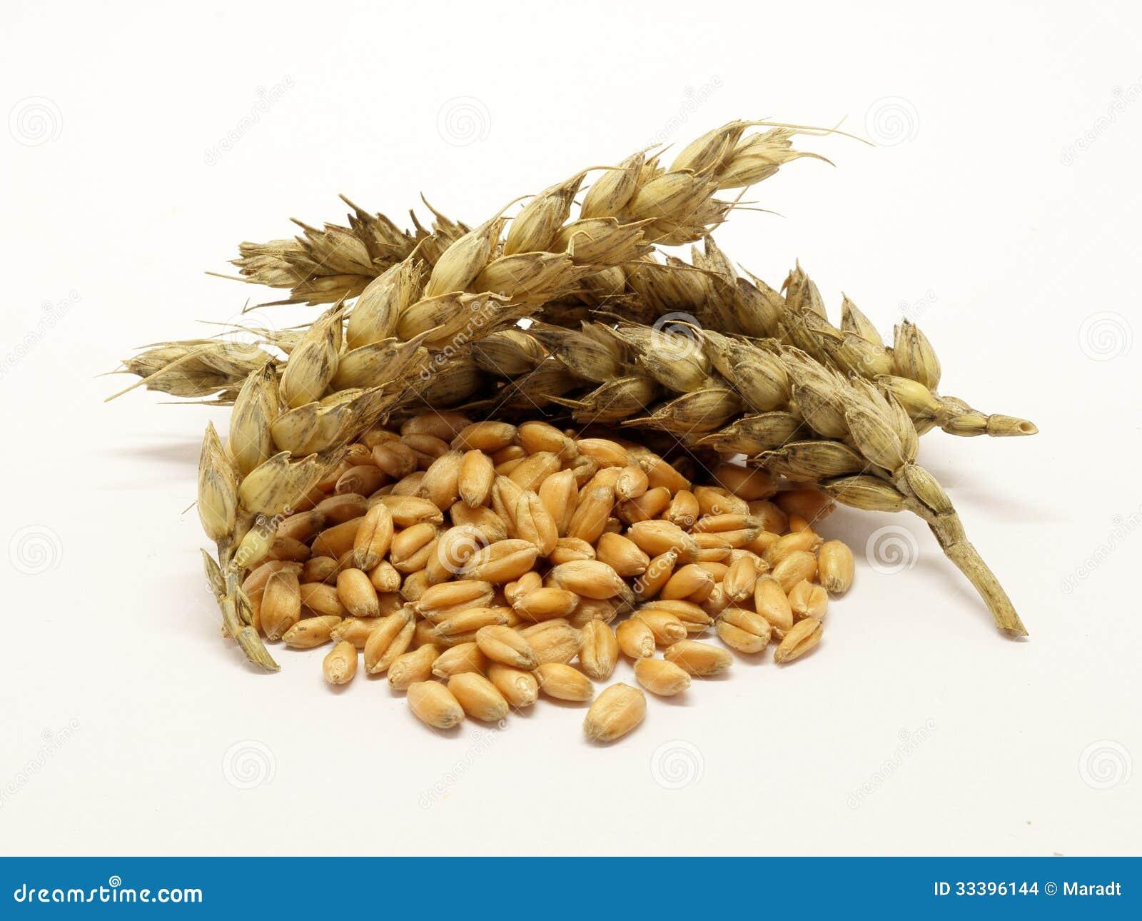 堆与耳朵的麦子五谷