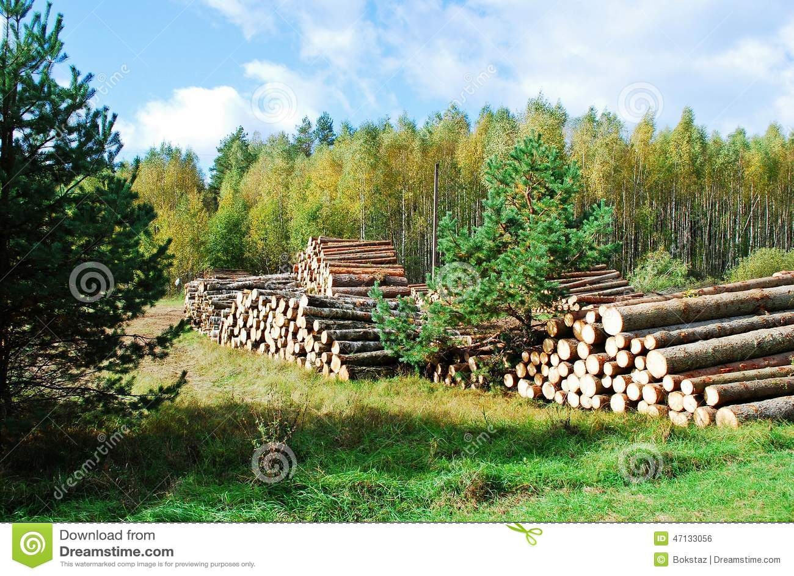 堆准备的木头在欧洲森林里