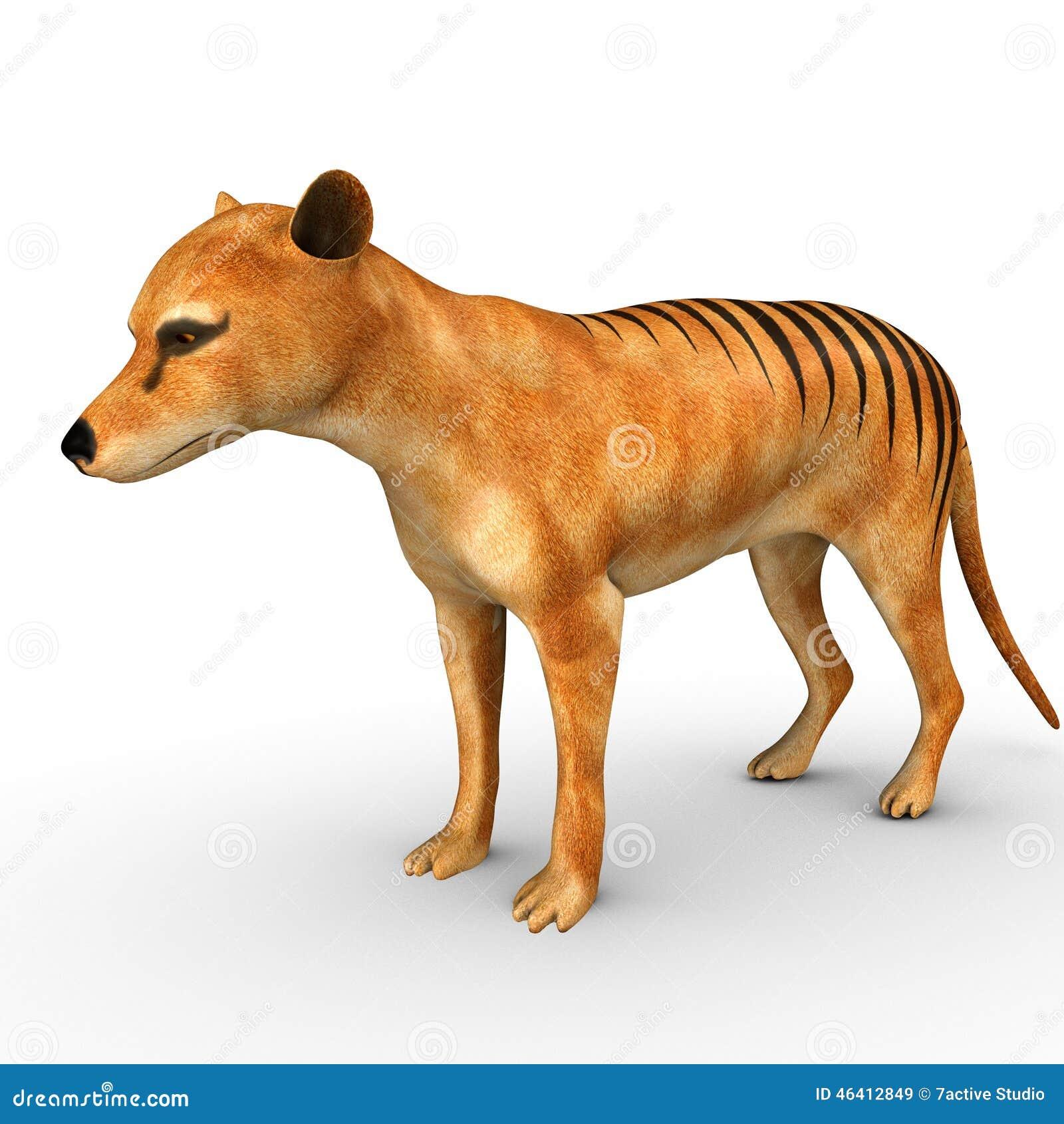 塔斯马尼亚的老虎