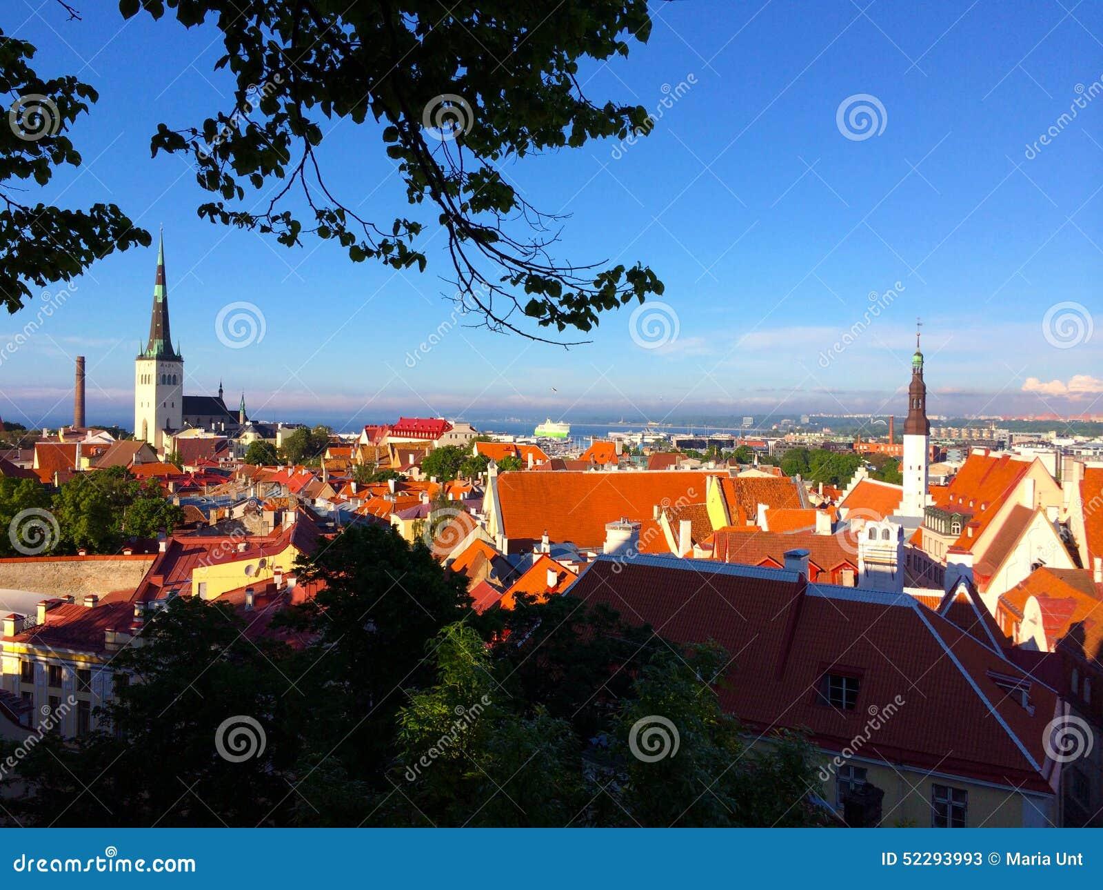 塔林,爱沙尼亚的首都 从老上部城市的看法一个老镇的红色屋顶的