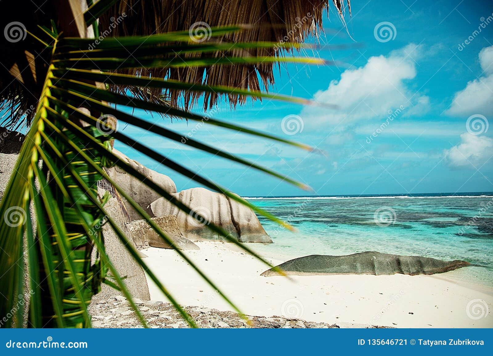 塞舌尔群岛 黑石头,山 热带和棕榈树