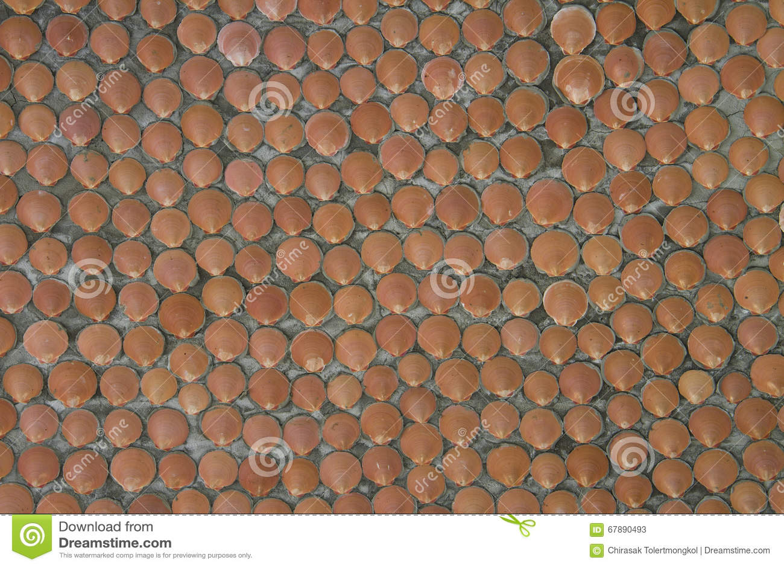 墙壁由海壳做成