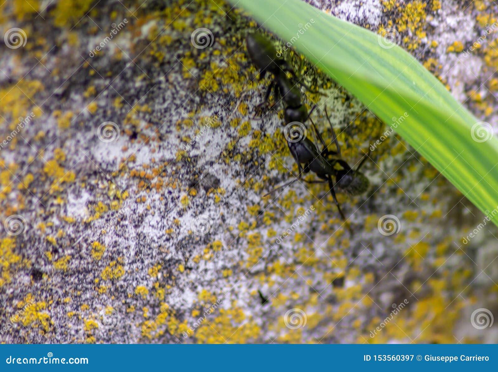 ?? 墙壁的照片有沟通互相的叶子和蚂蚁的与天线