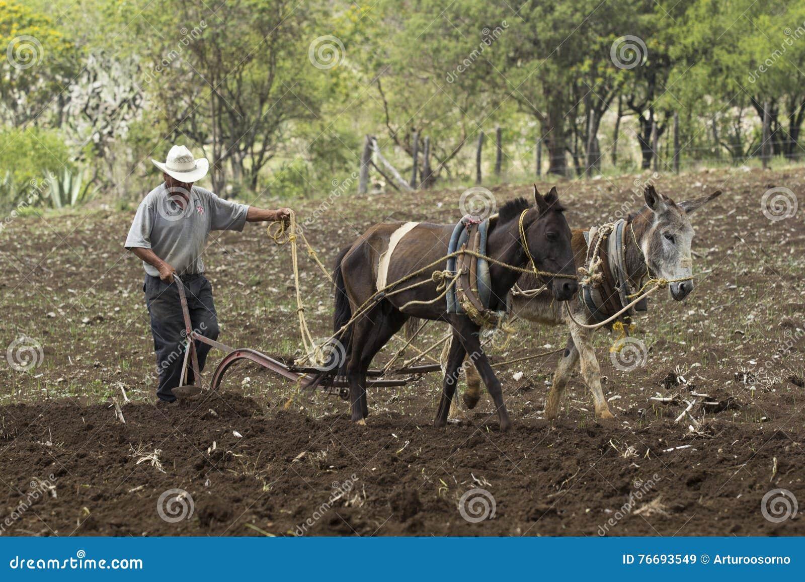墨西哥农民