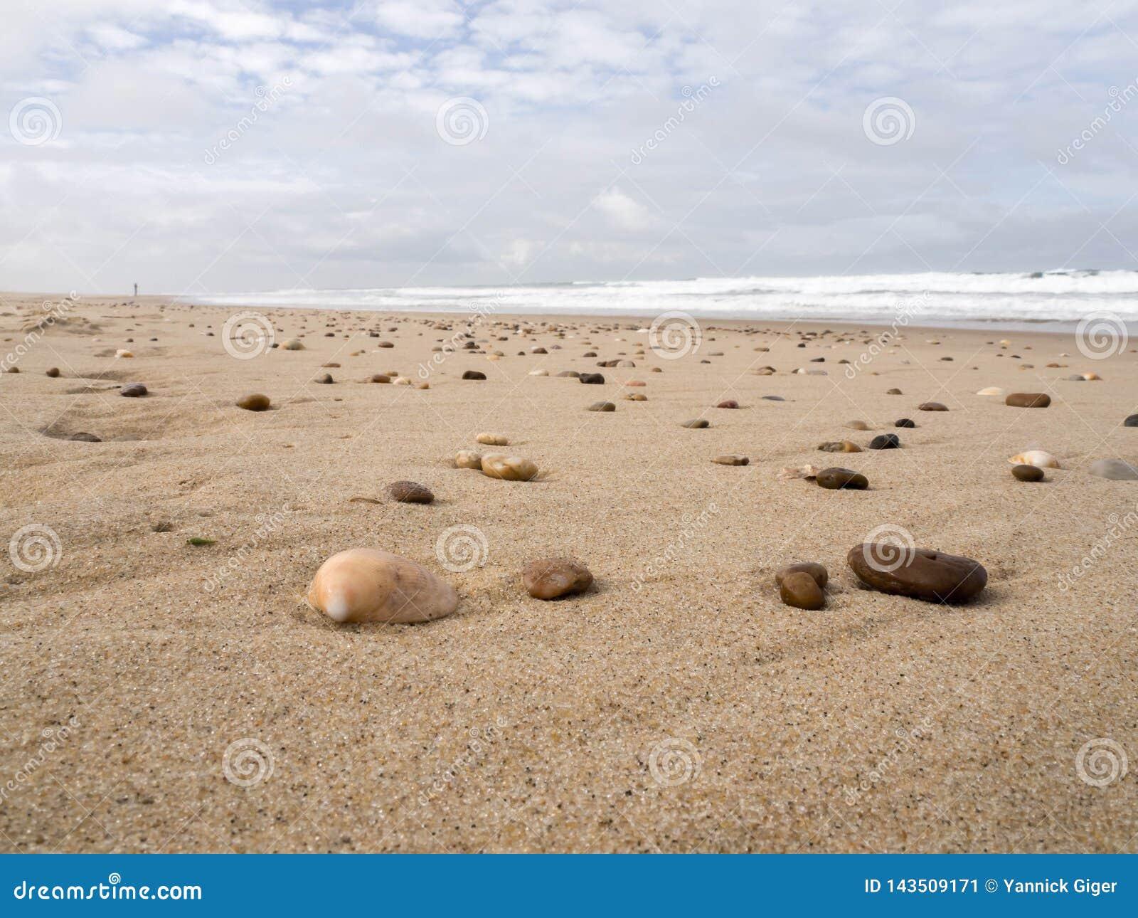 壳和岩石在海滩处于低潮中