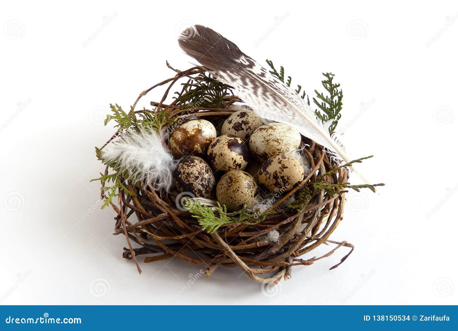复活节在巢的鹌鹑蛋与羽毛鸟