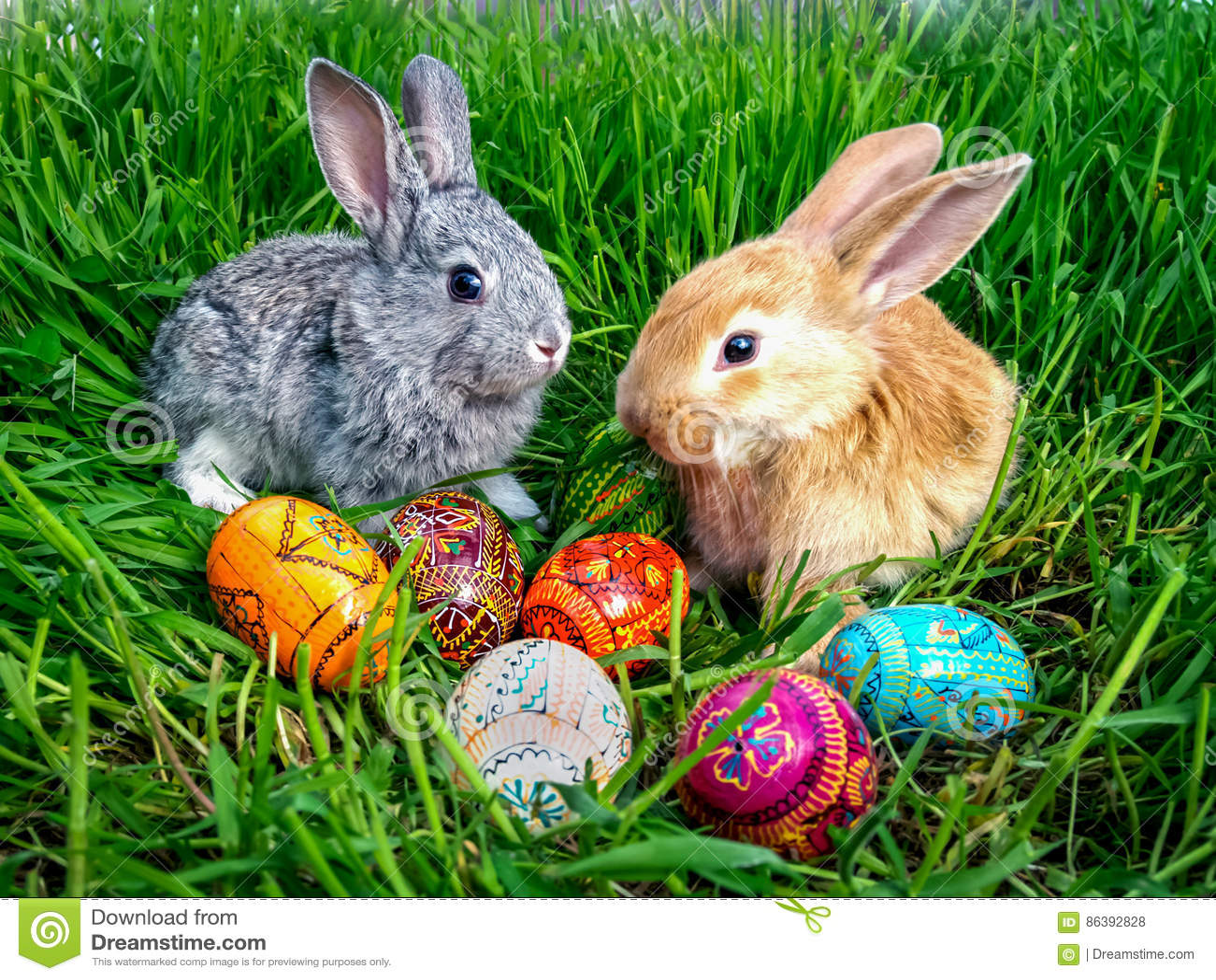 复活节兔子用在绿草的鸡蛋