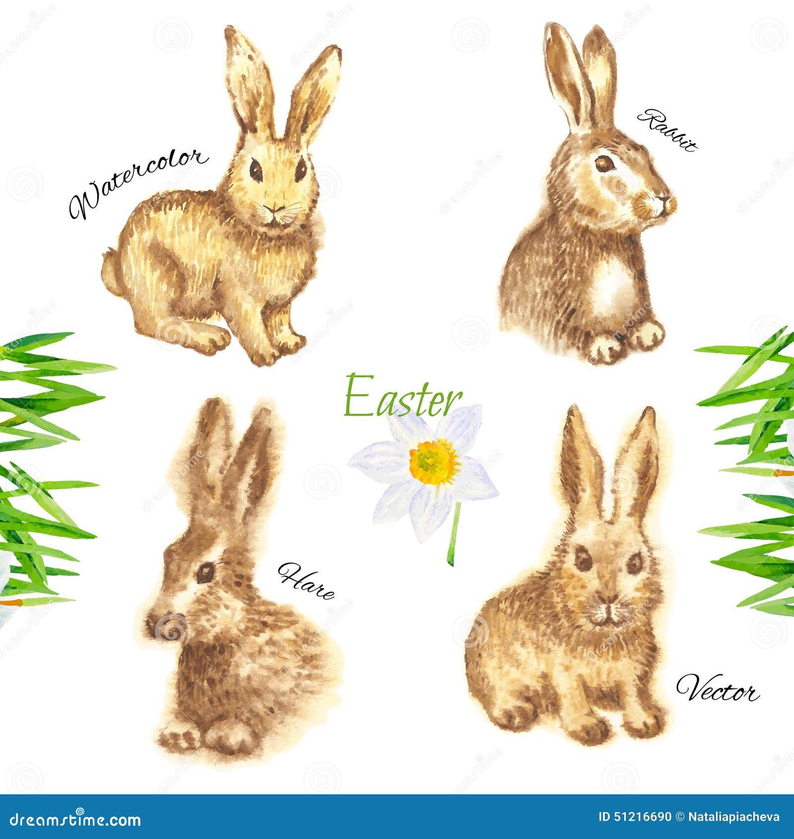 Кролики картинки нарисованные