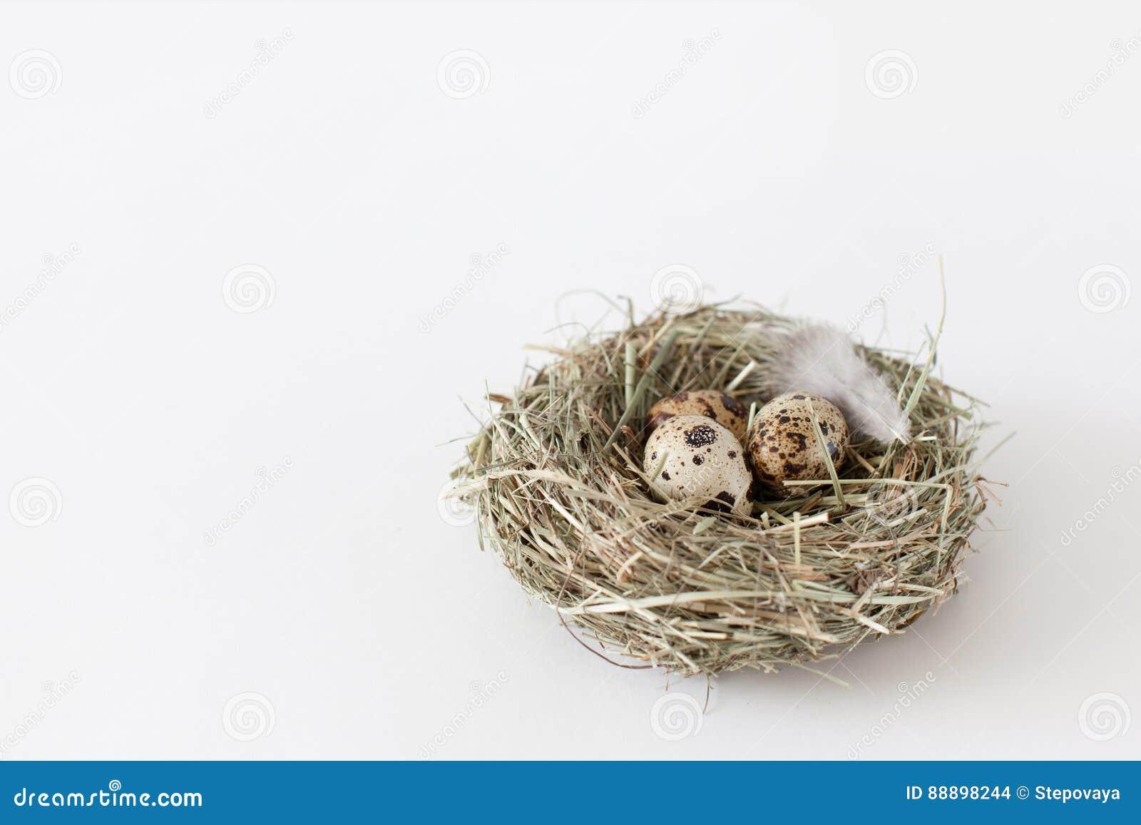 复活节装饰鹌鹑蛋在白色bac的鸟` s巢在