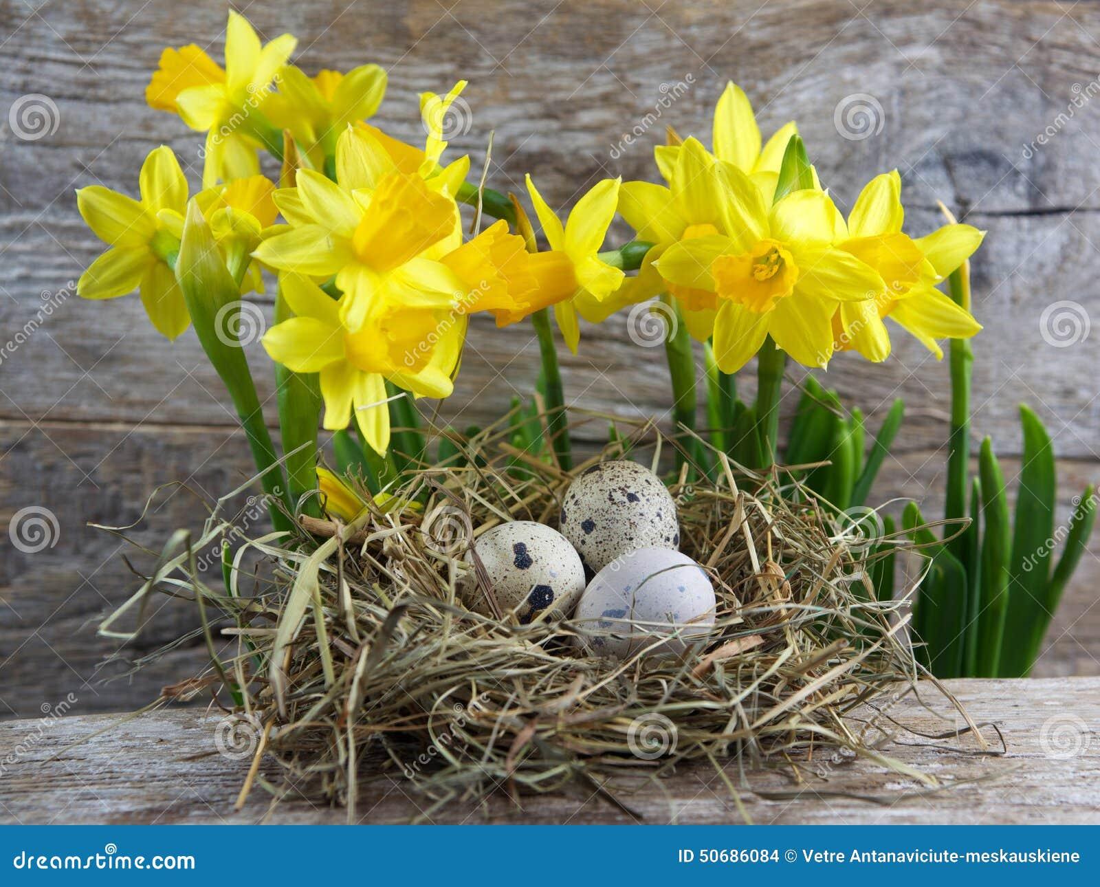 Download 复活节装饰 在巢的鸡蛋在木头 库存照片. 图片 包括有 节假日, 自然, 土气, bataan, 装饰, 木头 - 50686084