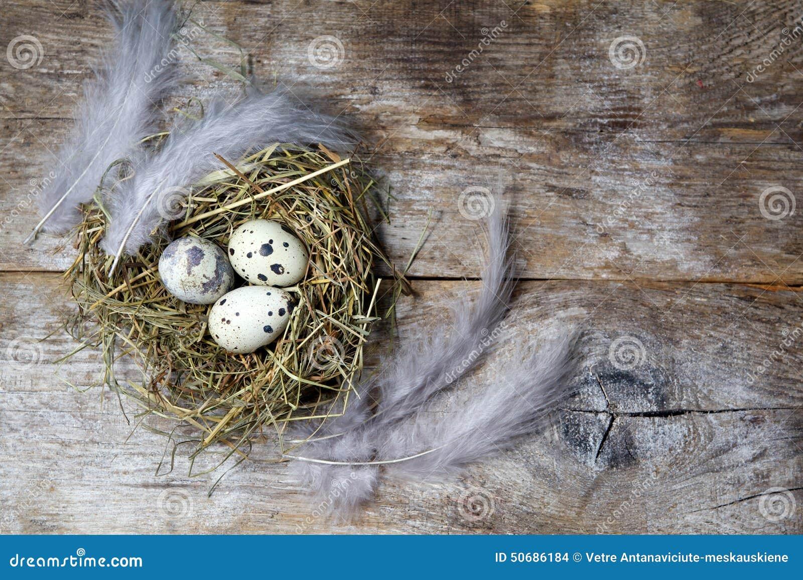 Download 复活节装饰 在巢的鸡蛋在木头 库存照片. 图片 包括有 传统, 节假日, 鸟舍, 装饰, 庆祝, 金黄, 葡萄酒 - 50686184