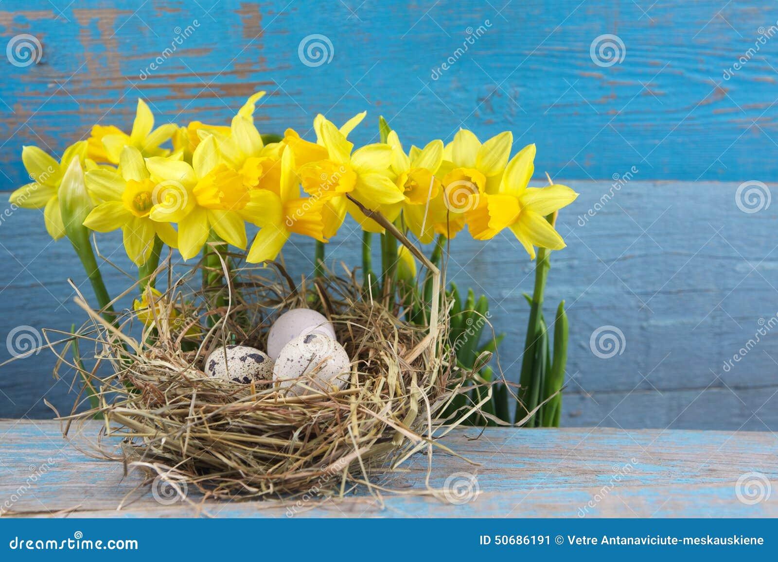 Download 复活节装饰 在巢的鸡蛋在木头 库存图片. 图片 包括有 传统, 装饰, 宗教信仰, 木头, 背包, 鸡蛋 - 50686191