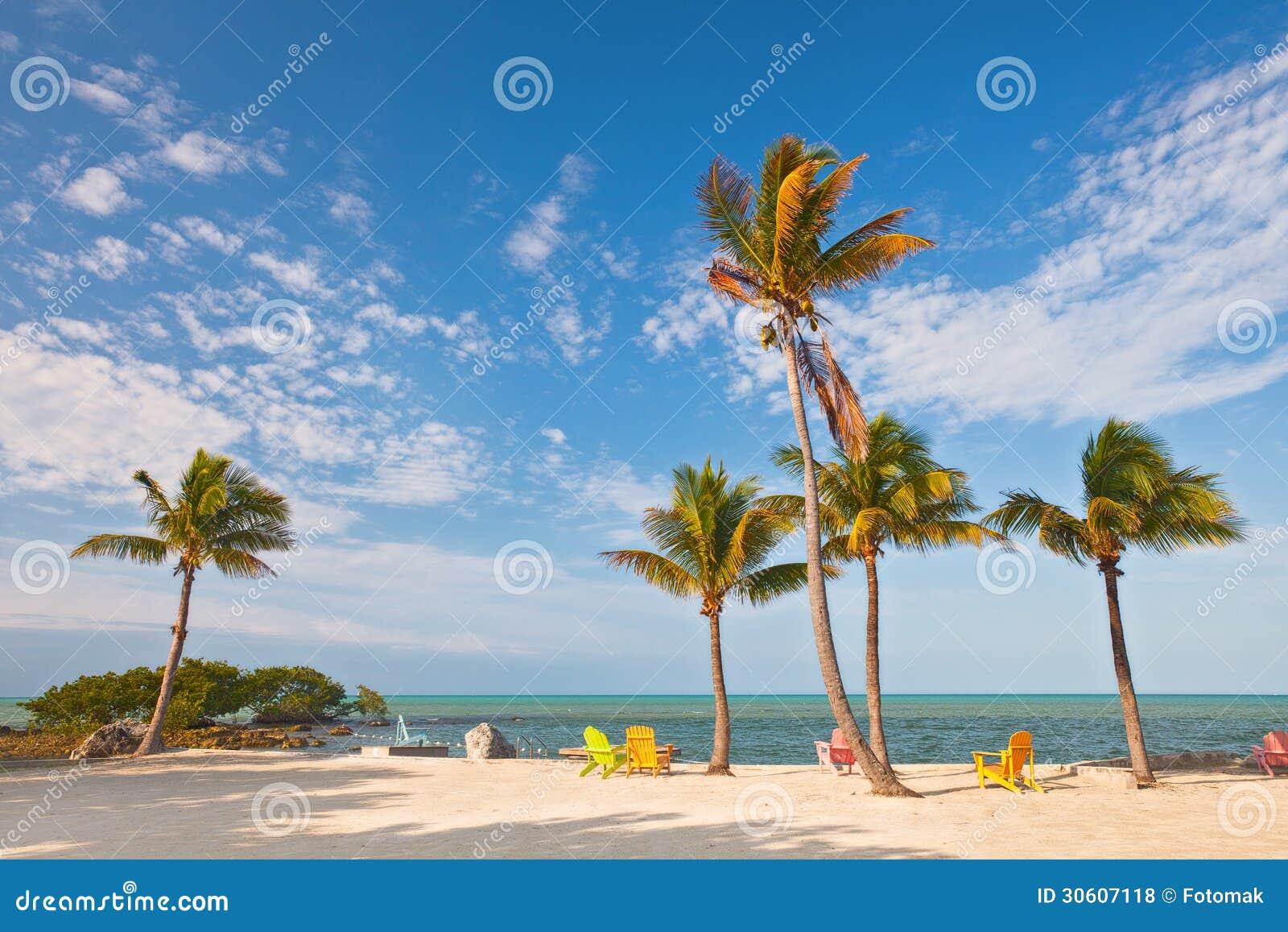 夏天与棕榈树和躺椅的海滩场面