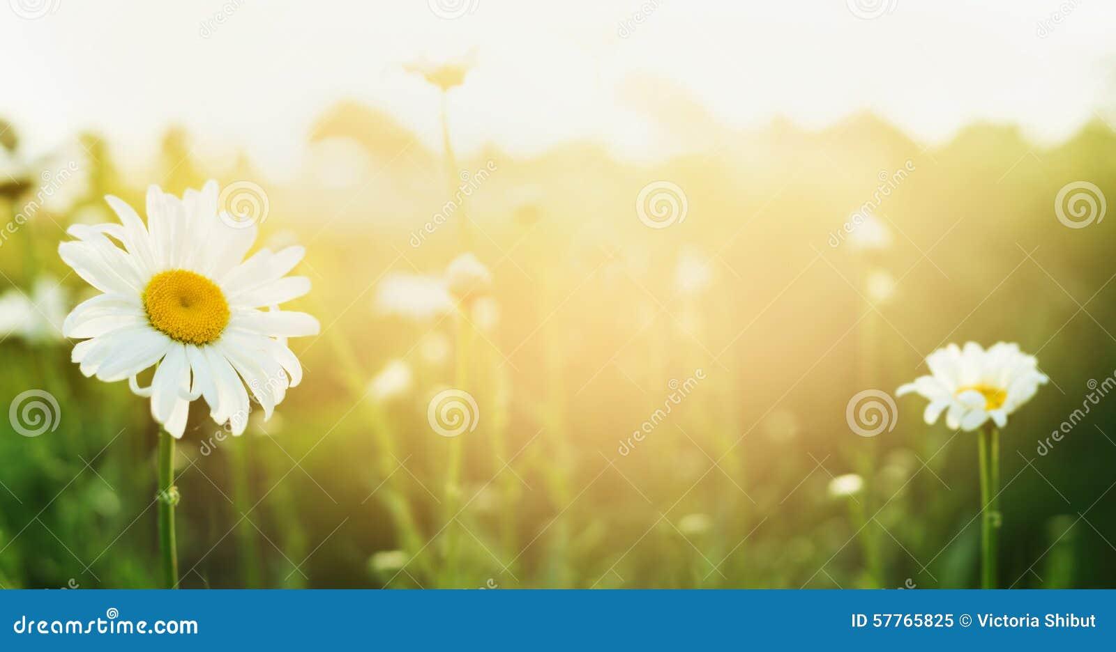 夏天与讲台和阳光,横幅的自然背景