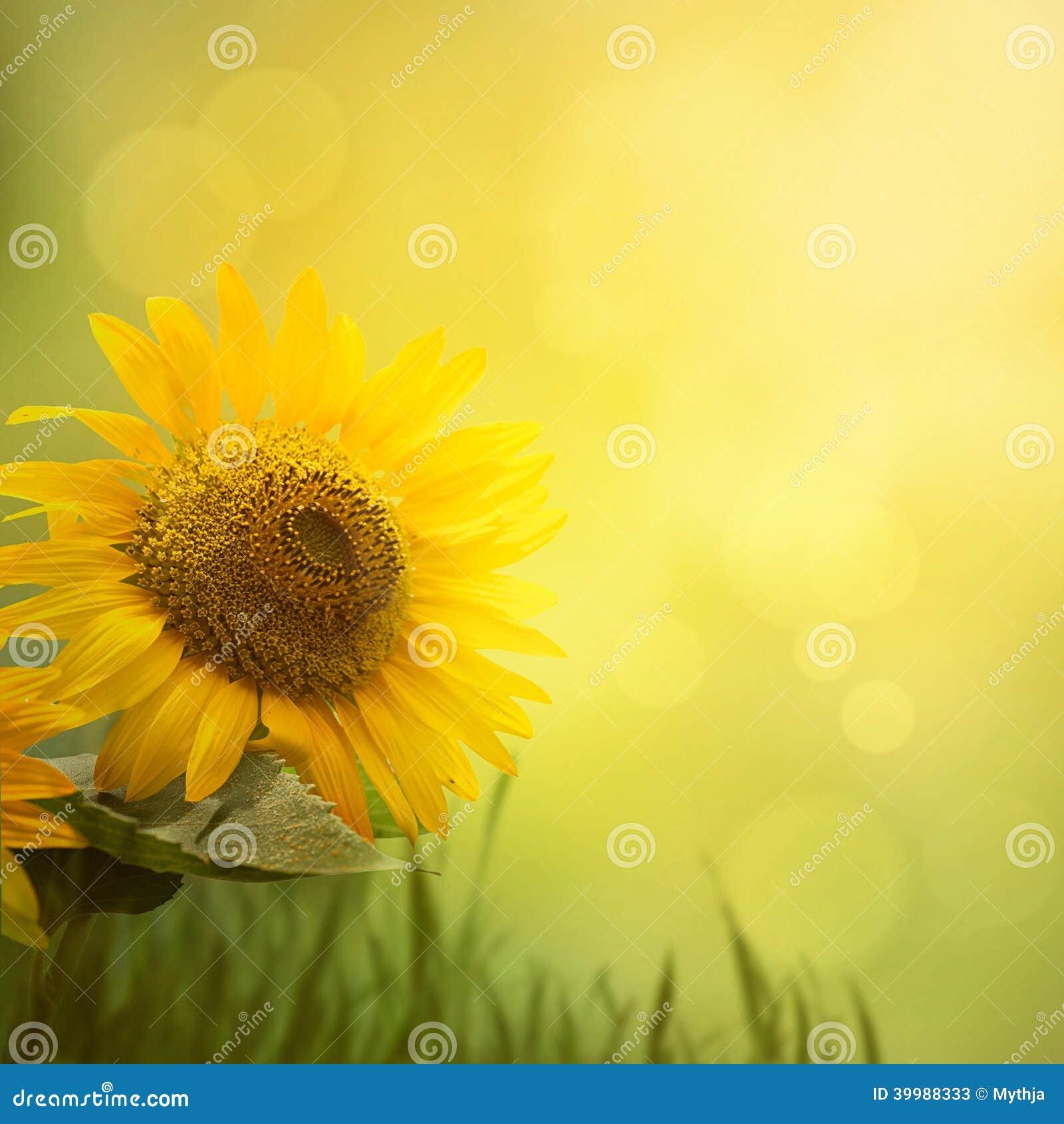 夏天向日葵背景