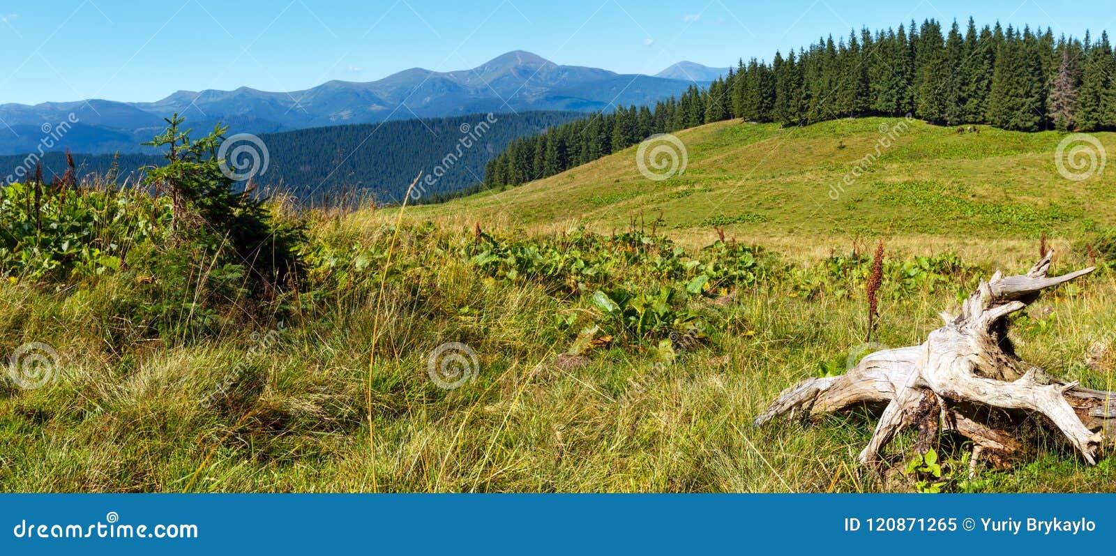 夏天喀尔巴阡山脉的山景,乌克兰