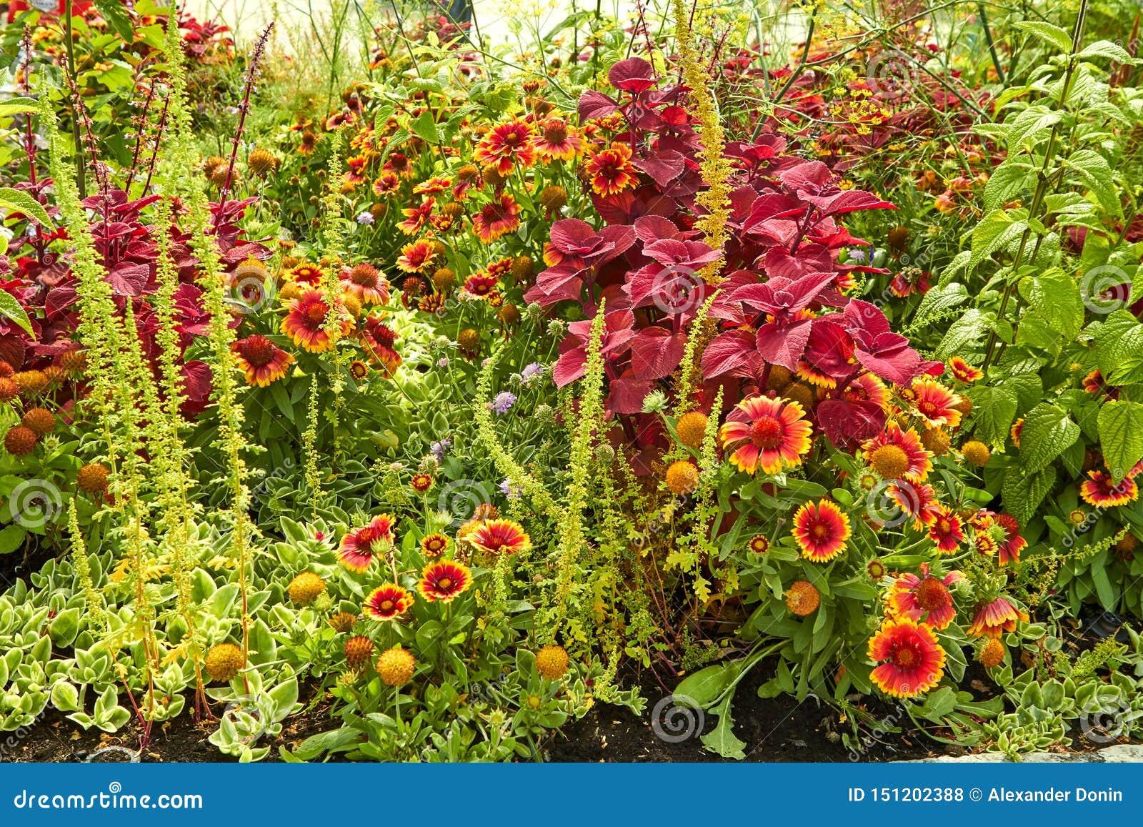 夏天开花的花在阿纳姆 荷兰7月
