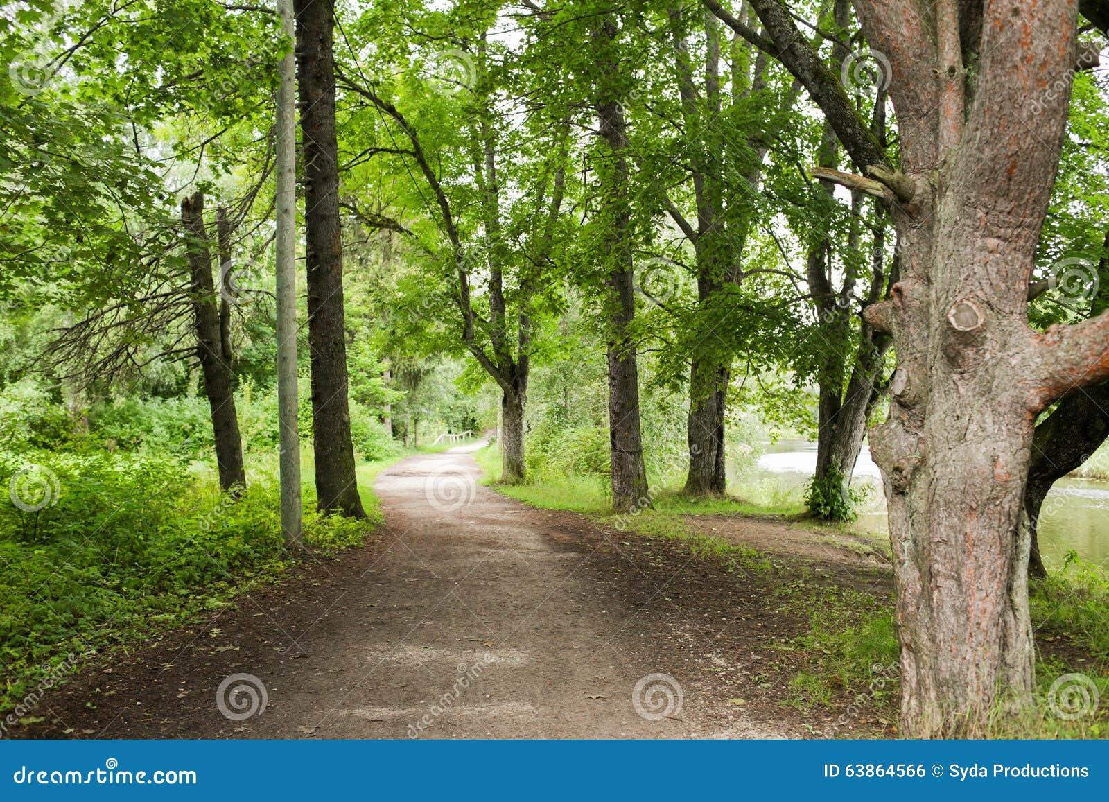 自然,季节和环境概念-夏天森林和道路.图片
