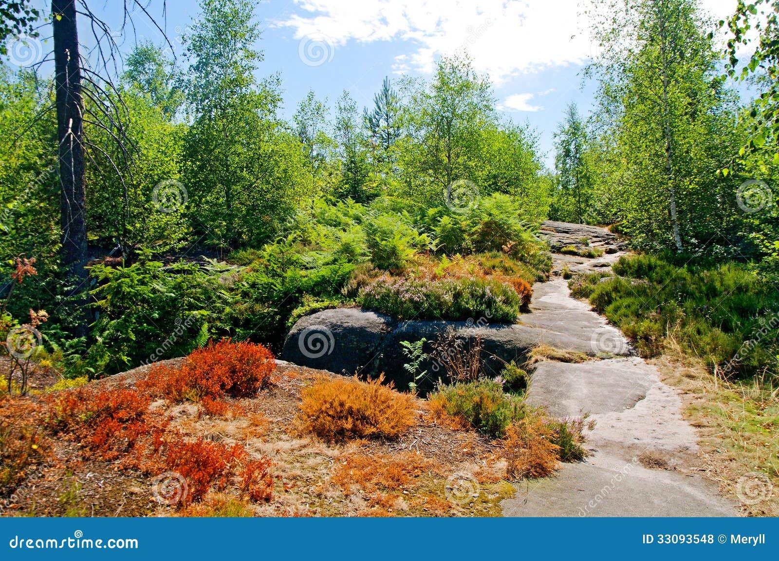 夏天森林背景图片