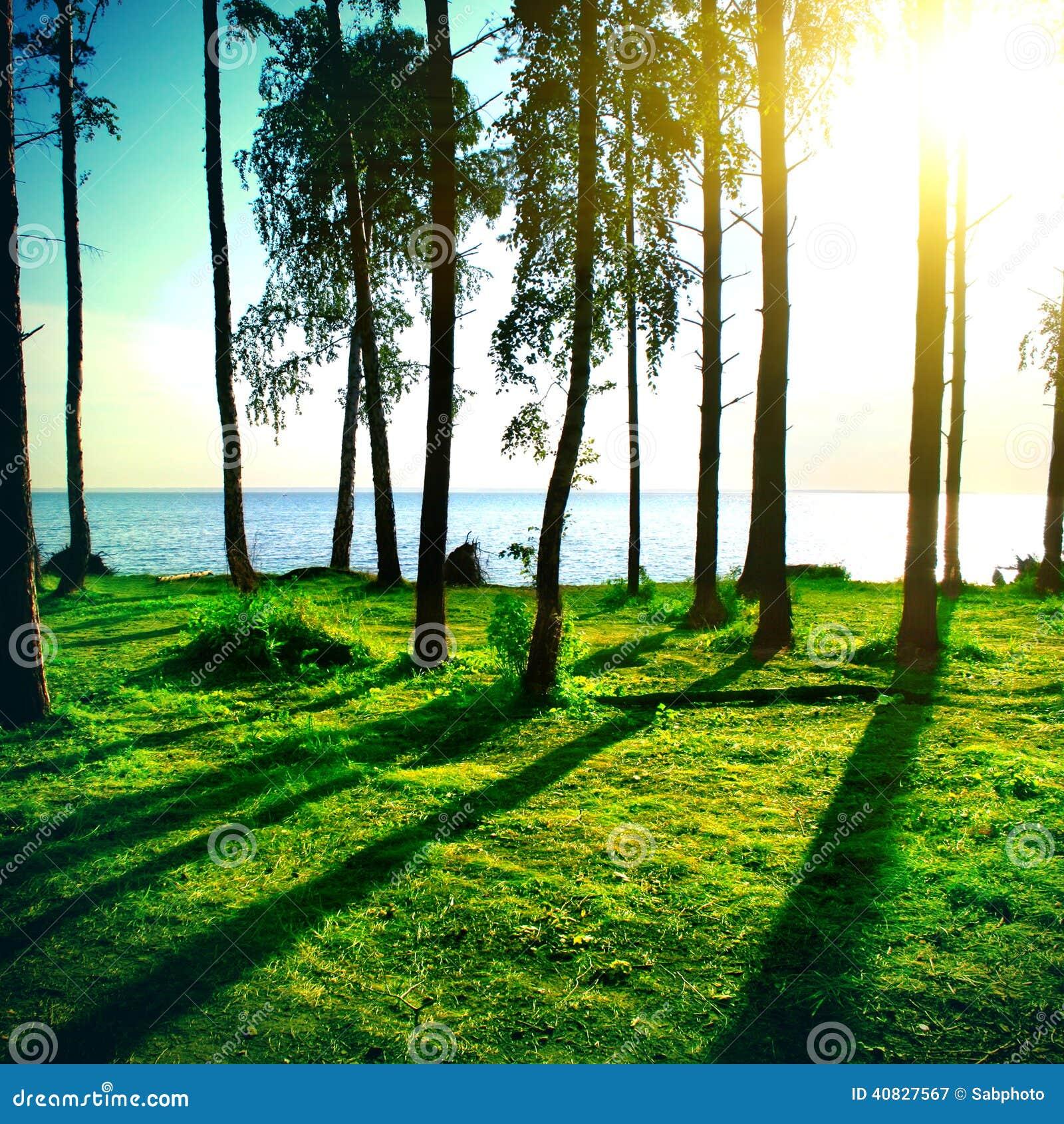 夏天森林风景图片