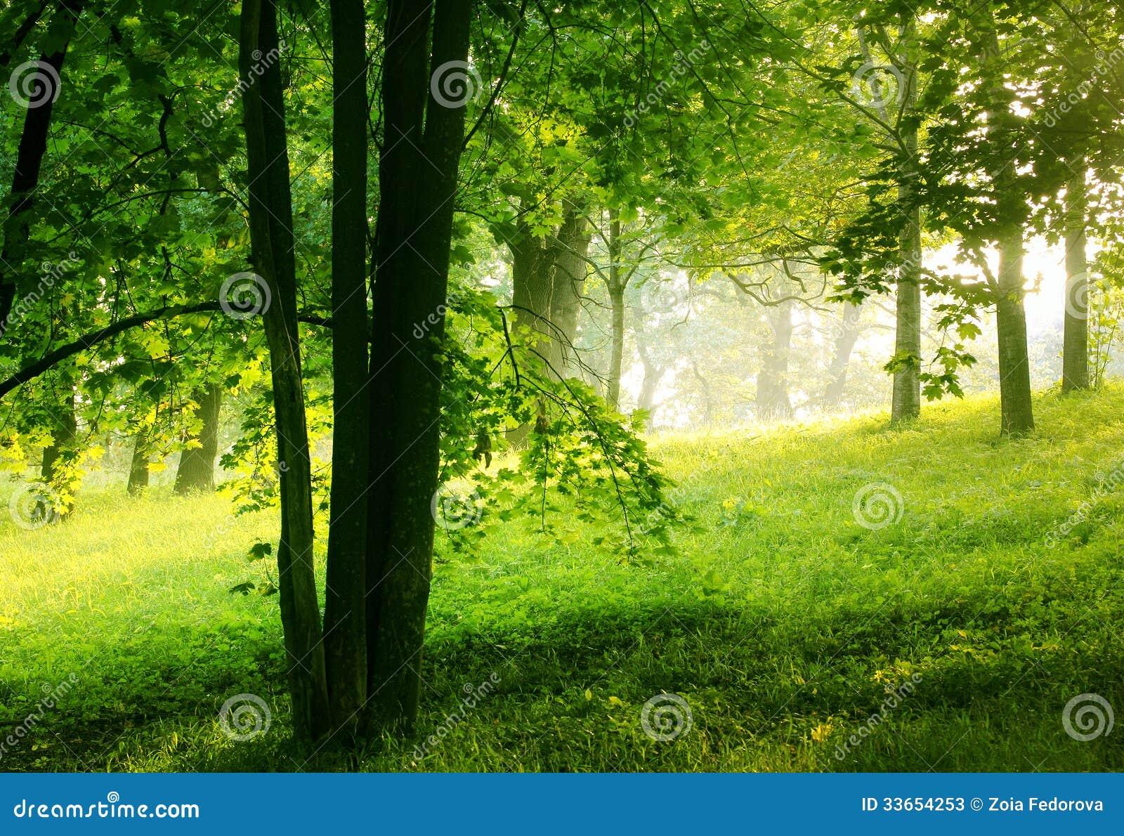 库存照片: 夏天森林图片