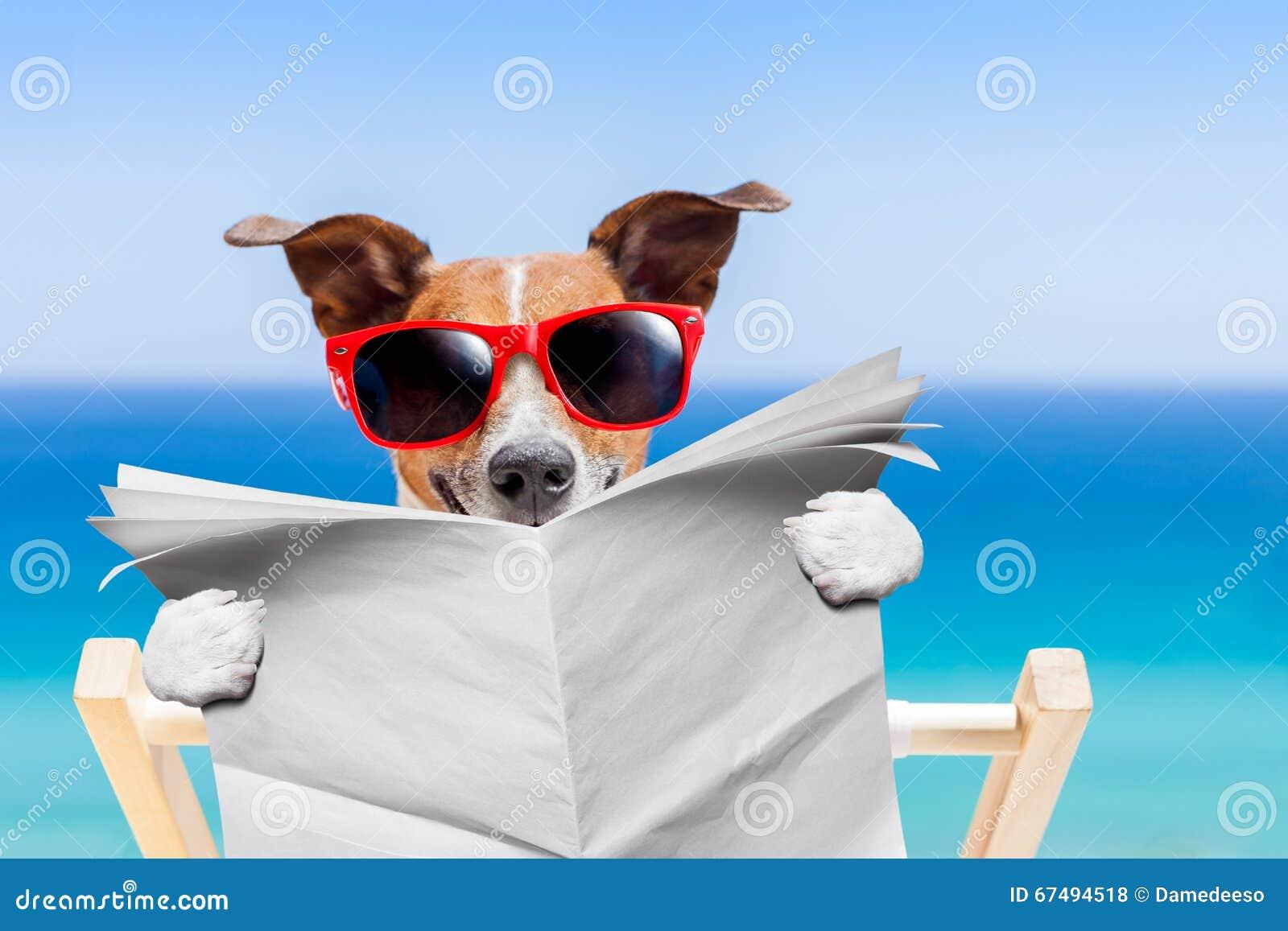 夏天海滩狗图片