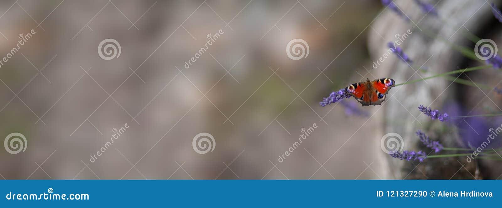夏天-在淡紫色的蝴蝶