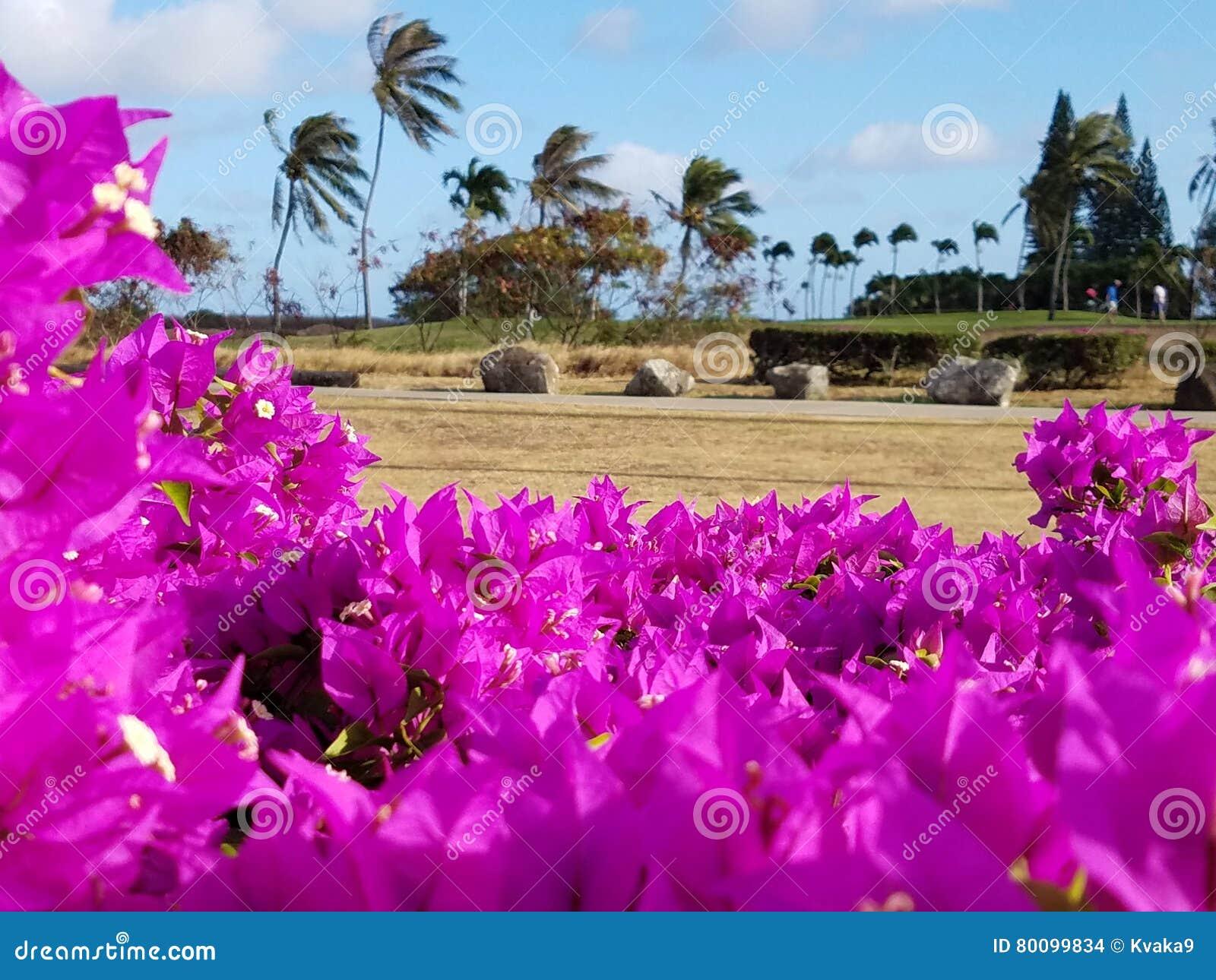 夏威夷Kai高尔夫球场