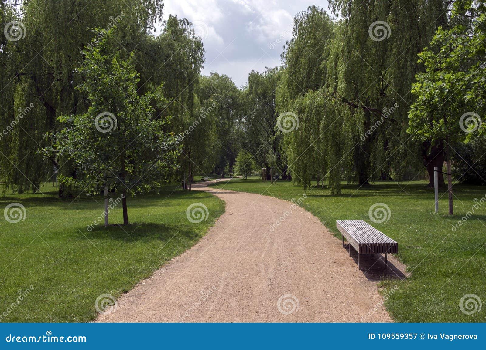 夏时、绿叶、道路投掷和长凳的,晴朗,蓝天公园