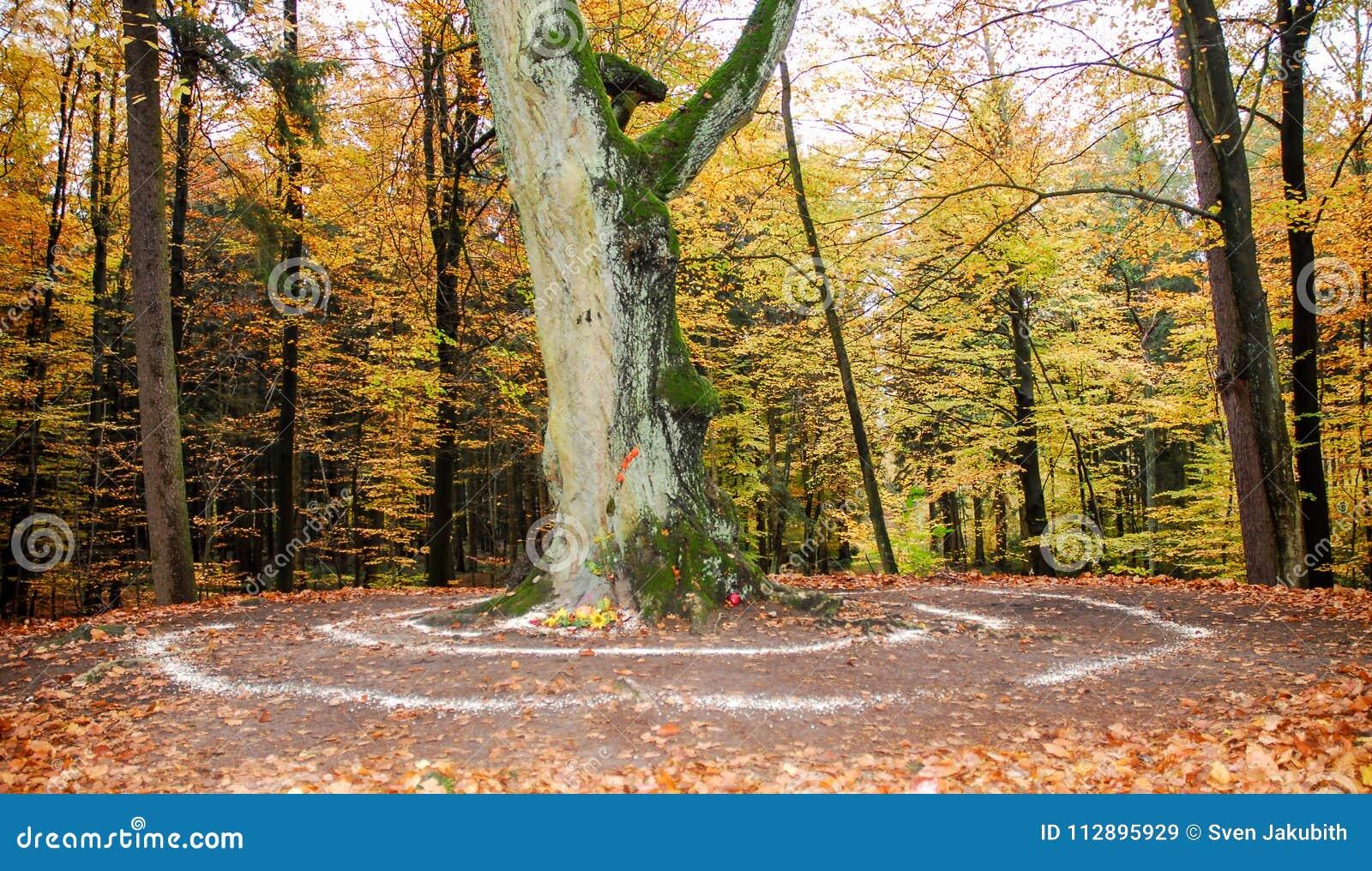 外面异教的法坛和螺旋工作在树旁边