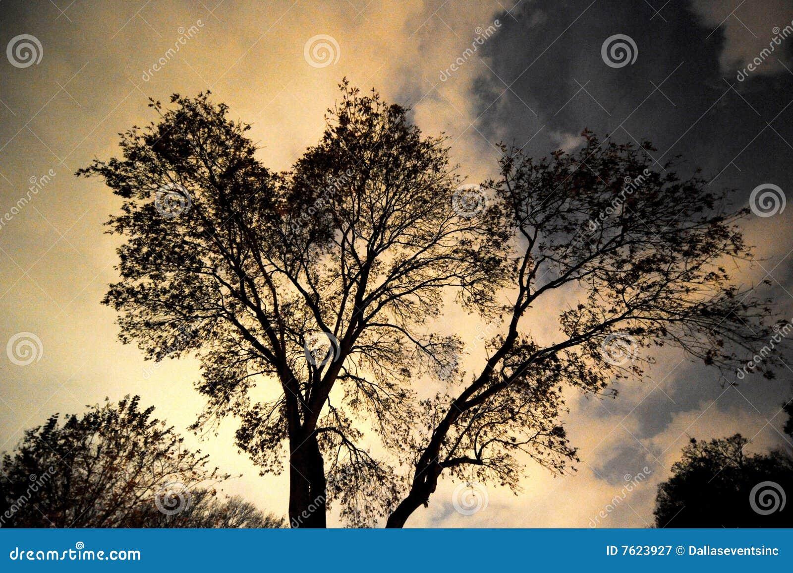 多云剪影天空结构树